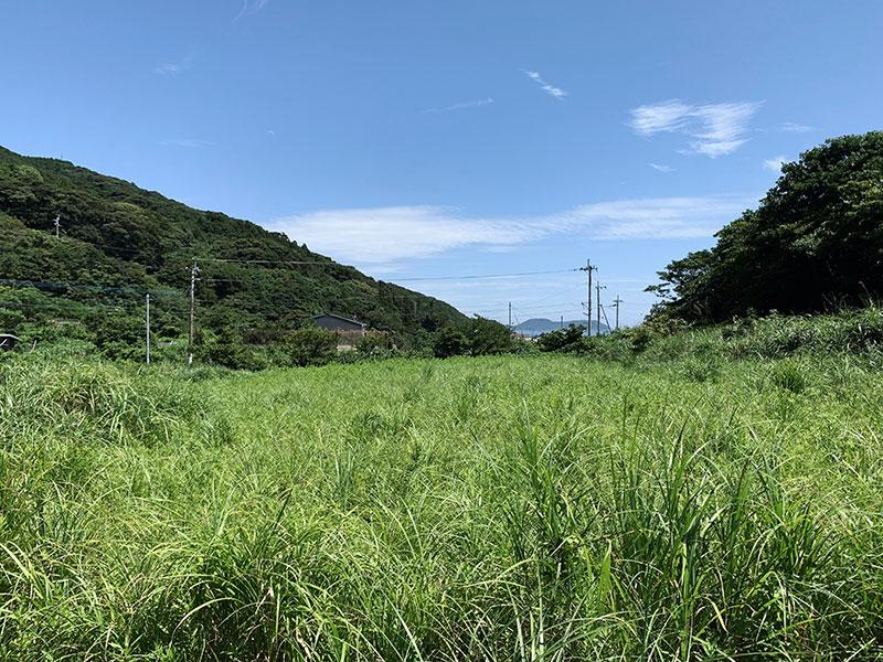 草が伸び放題の休耕地