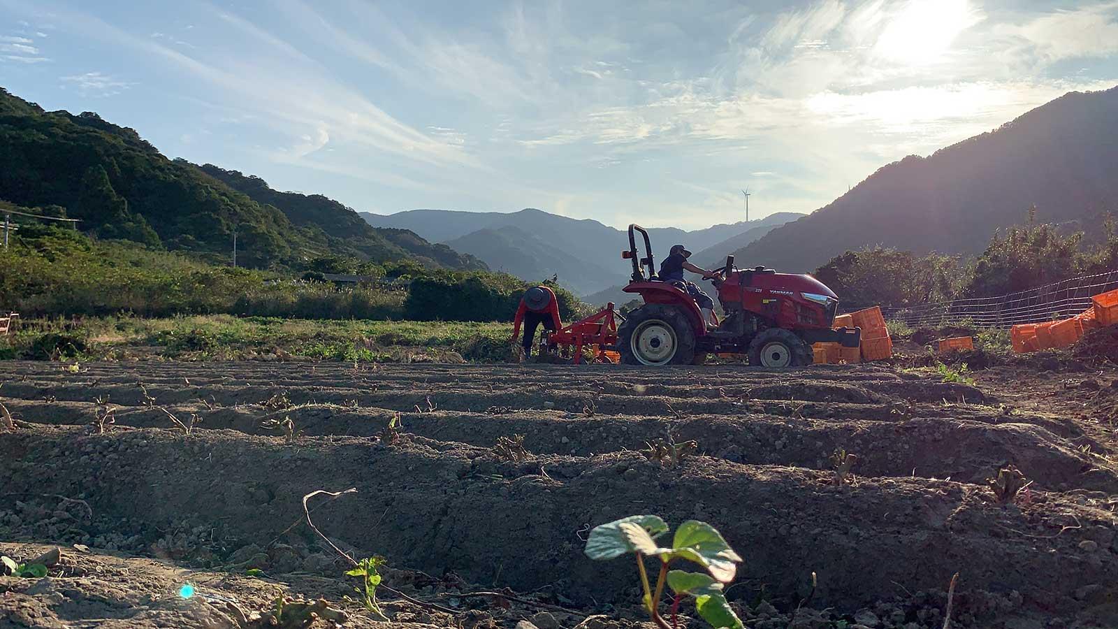 焼酎に適した品種の甘藷を、自社や契約農家の手で栽培。芋焼酎「五島灘」は100%上五島産で造られている。